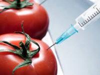 L'expérience biotechnologique en Afrique de l'ouest :Une réponse à l'autosuffisance alimentaire