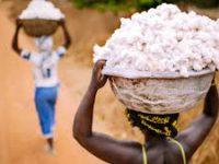 Biotechnologie: une source de développement pour l'Afrique