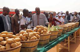 La Journée des légumineuses célébrée à Koumbané en présence du Président du Faso et du Directeur général de la FAO