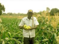 DEVELOPPEMENT DE L'AGRICULTURE EN AFRIQUE : LES MINISTRES DEMANDENT UN ACCROISSEMENT DES INVESTISSEMENTS