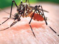 Le Niger, le « client fort » des épidémies